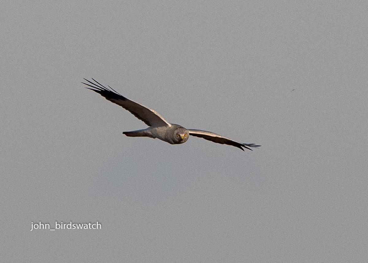 f:id:john_birdswatch:20200205204641j:plain