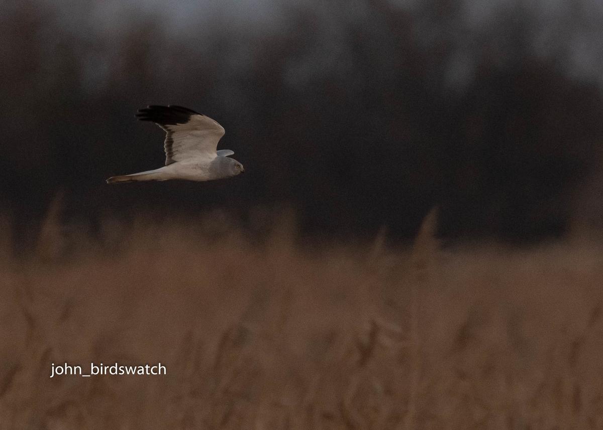 f:id:john_birdswatch:20200207203756j:plain