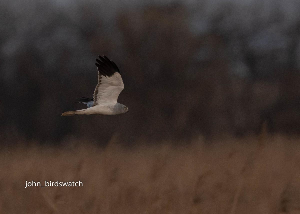 f:id:john_birdswatch:20200207203804j:plain