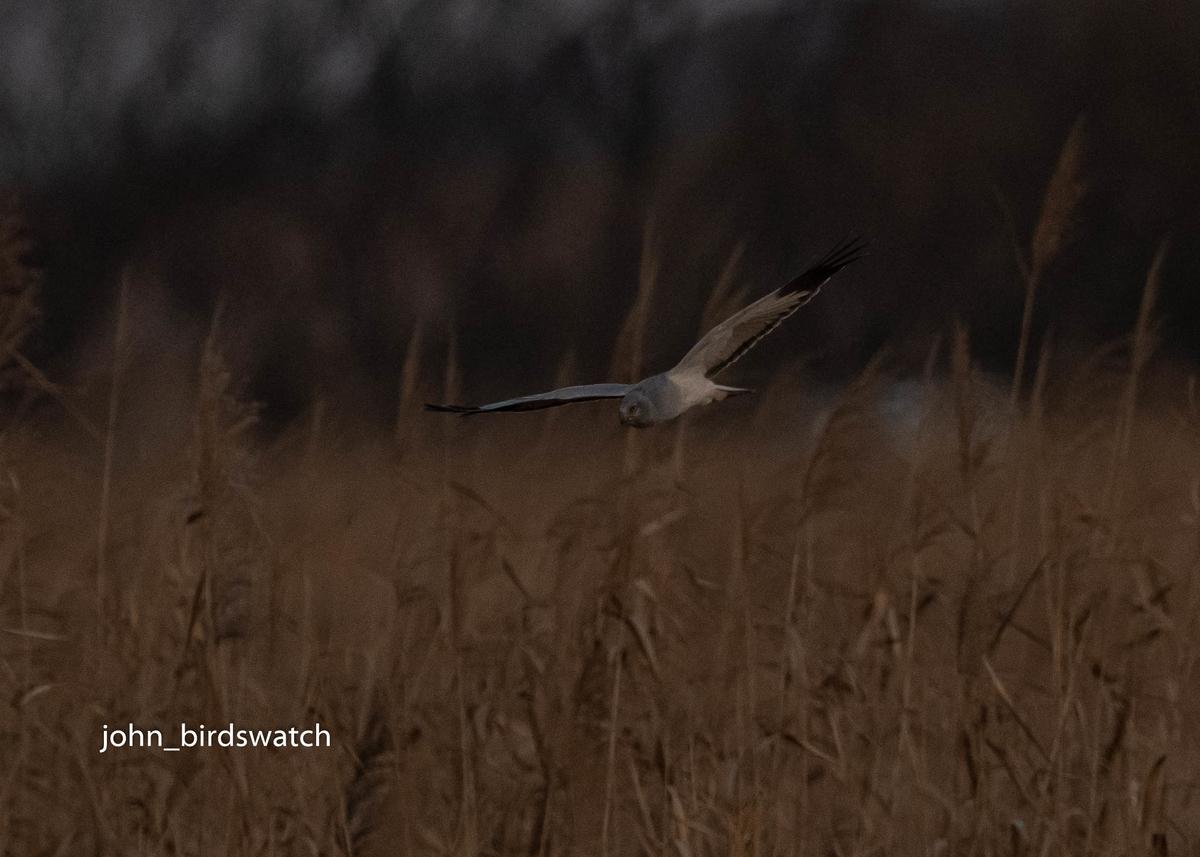 f:id:john_birdswatch:20200207203813j:plain