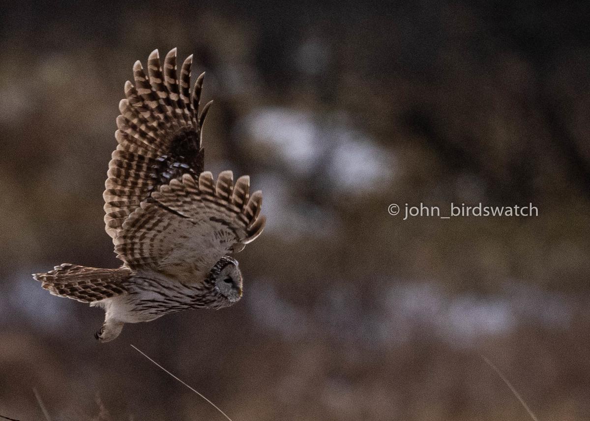 f:id:john_birdswatch:20200328200131j:plain