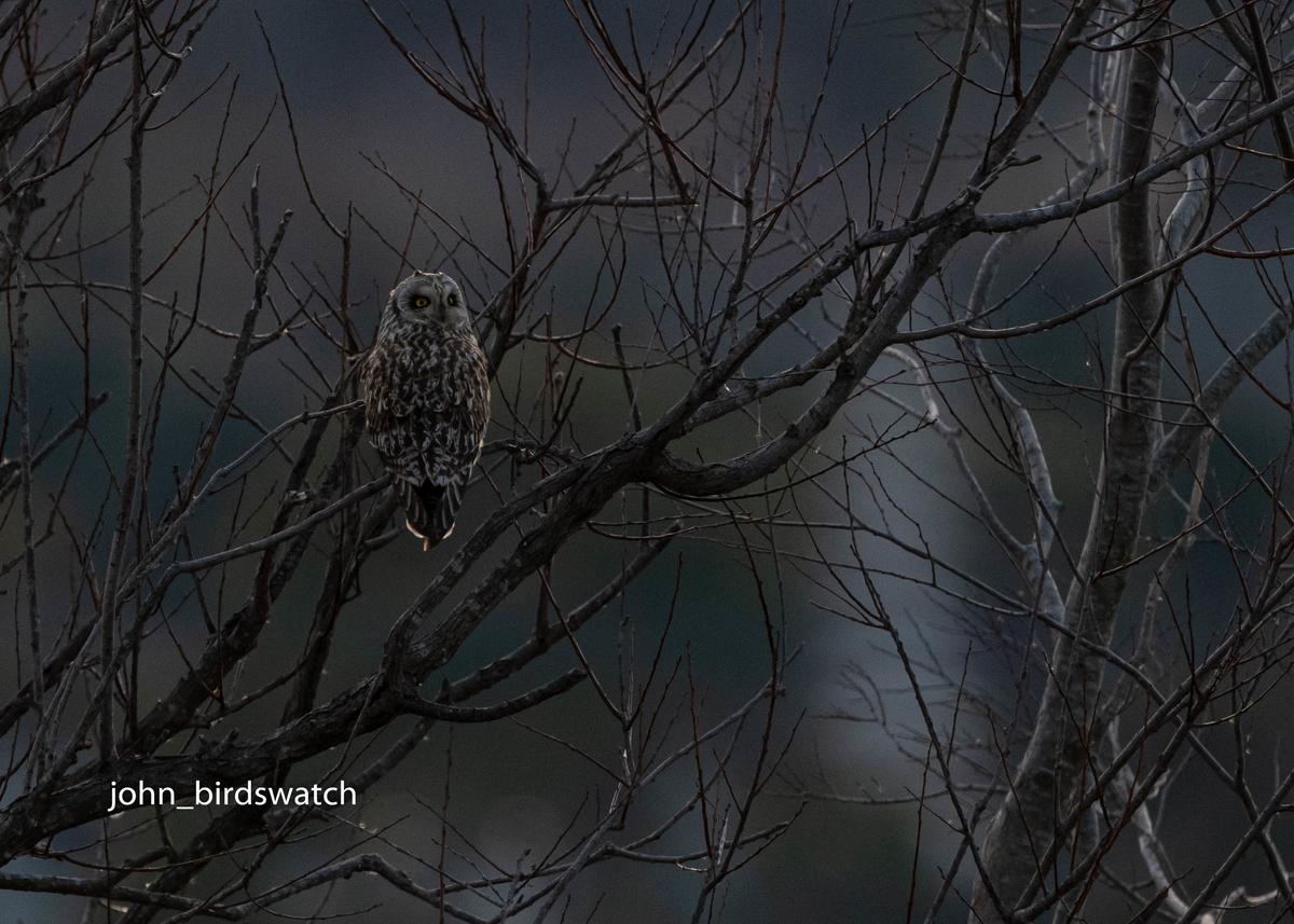 f:id:john_birdswatch:20200329140221j:plain
