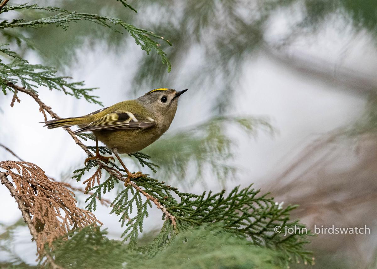 f:id:john_birdswatch:20200329150340j:plain