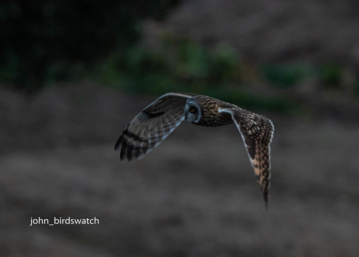 f:id:john_birdswatch:20200409223413j:plain