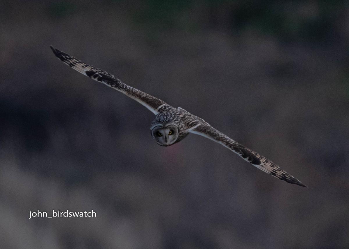 f:id:john_birdswatch:20200410183337j:plain