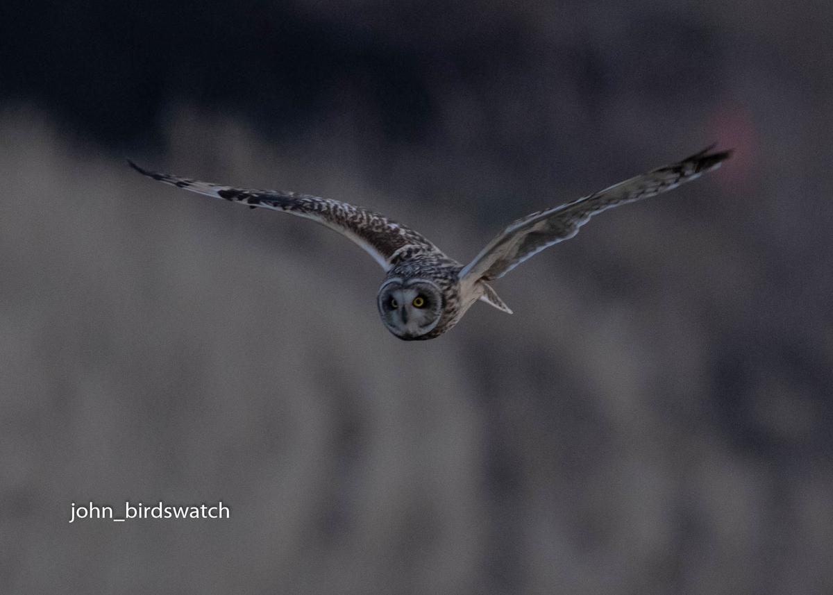 f:id:john_birdswatch:20200410183613j:plain