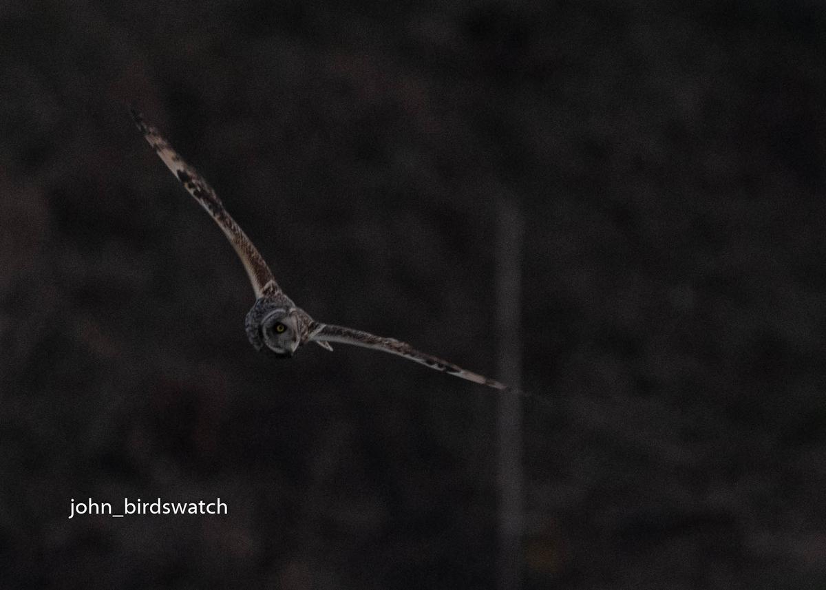 f:id:john_birdswatch:20200410183619j:plain