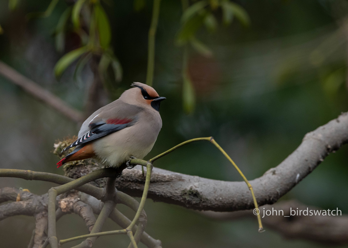 f:id:john_birdswatch:20200412101038j:plain