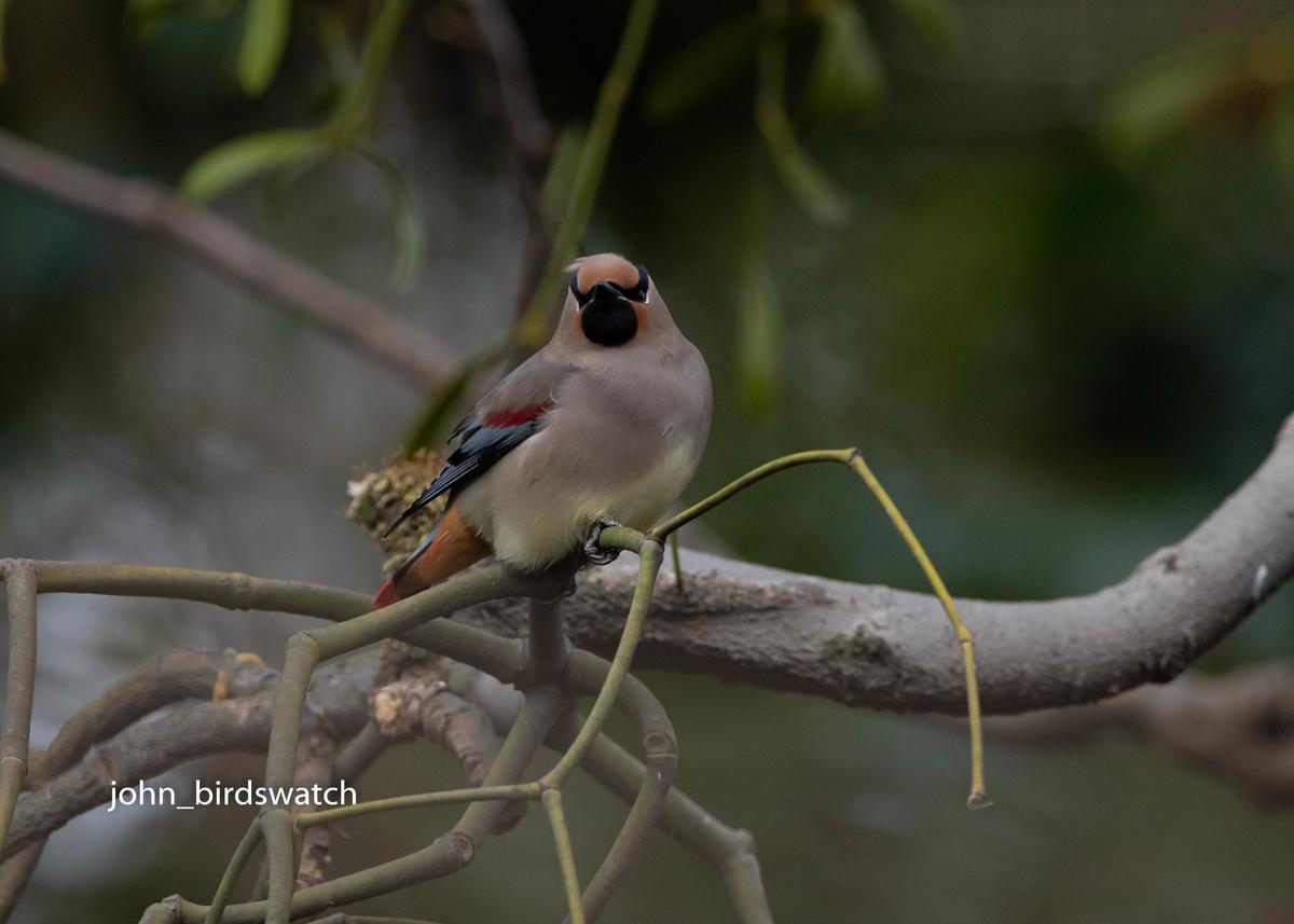 f:id:john_birdswatch:20200412101046j:plain