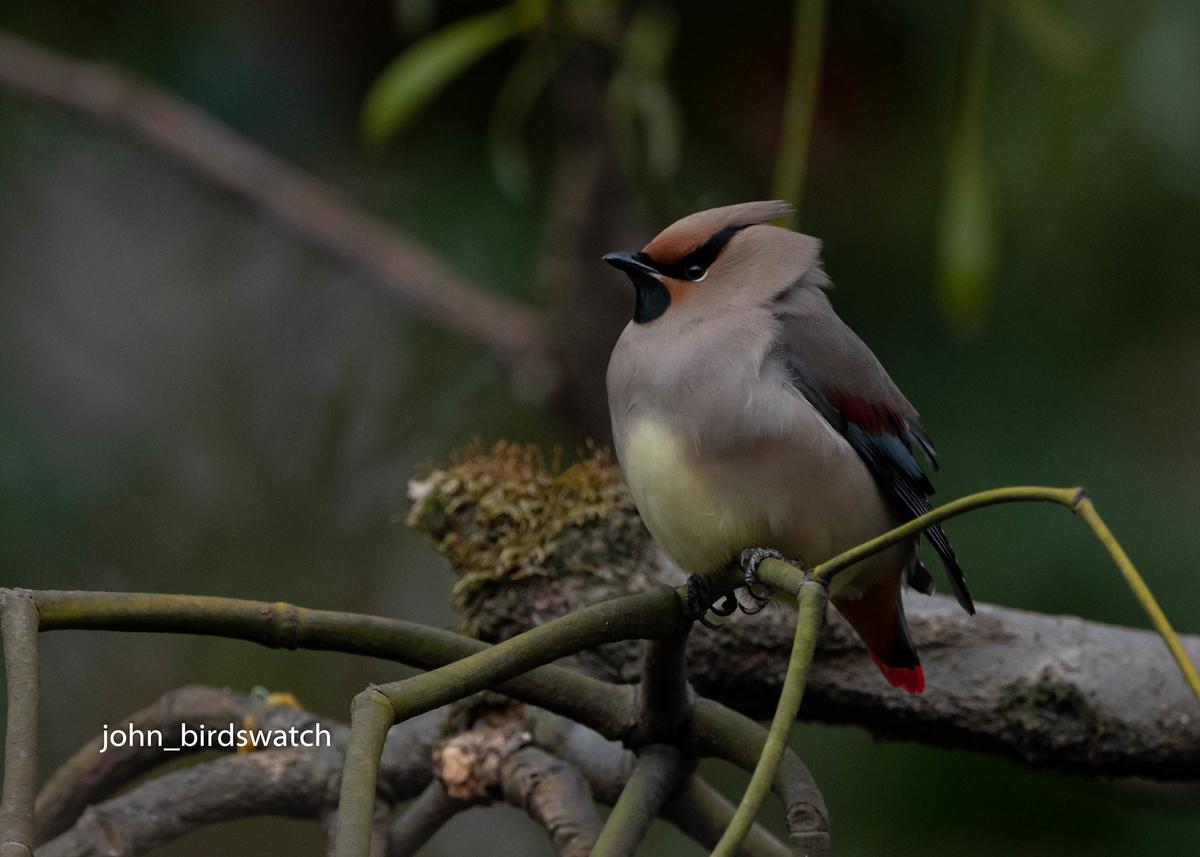 f:id:john_birdswatch:20200412101051j:plain