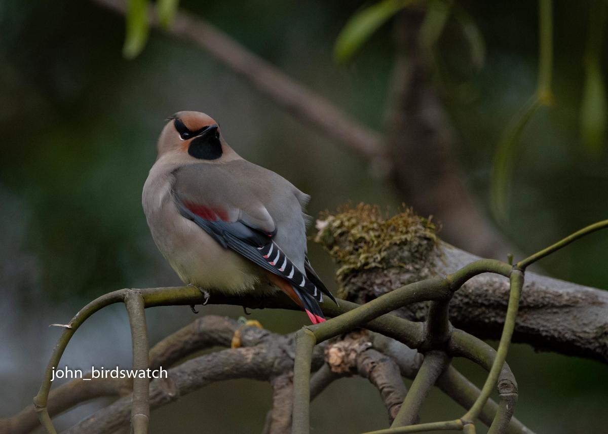 f:id:john_birdswatch:20200412101059j:plain