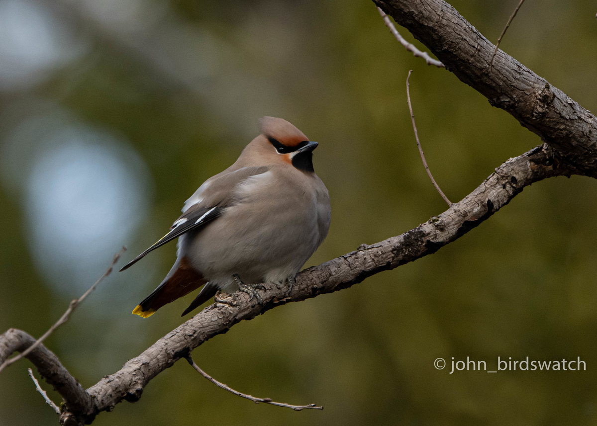 f:id:john_birdswatch:20200412101115j:plain