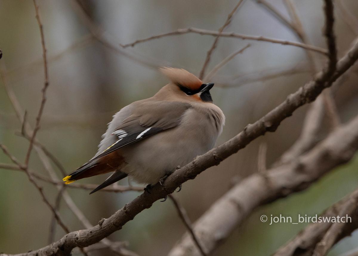 f:id:john_birdswatch:20200412101124j:plain