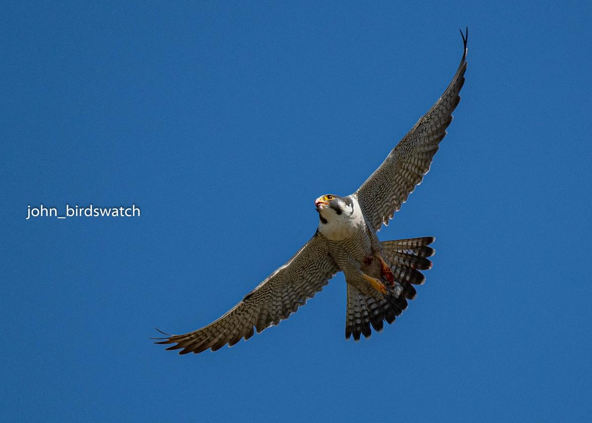 f:id:john_birdswatch:20200425212847j:plain