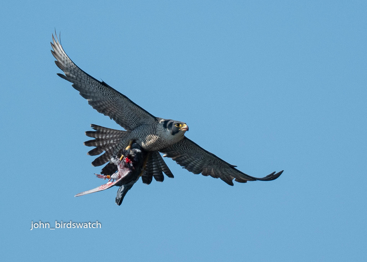 f:id:john_birdswatch:20200425214436j:plain
