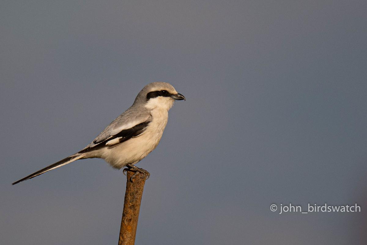 f:id:john_birdswatch:20200515183211j:plain