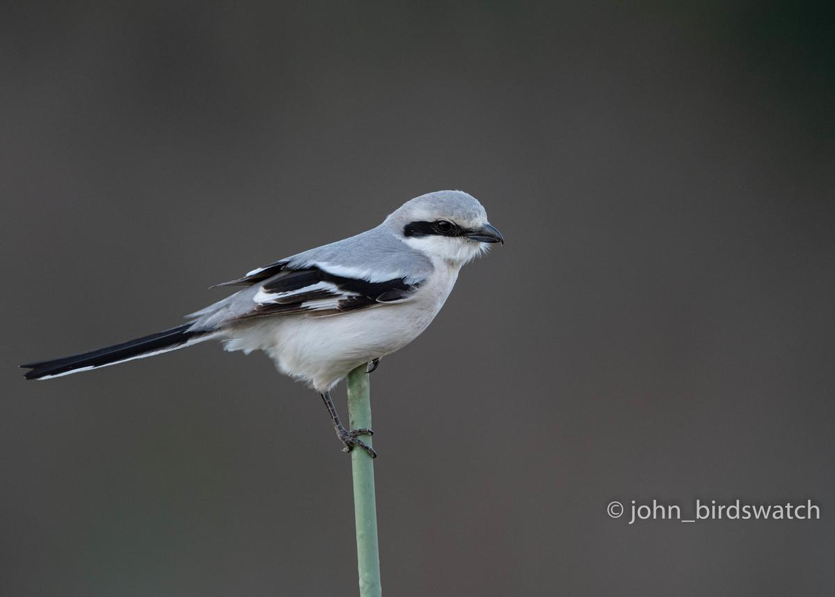 f:id:john_birdswatch:20200516111227j:plain