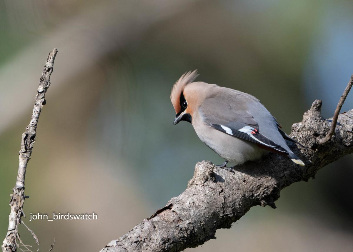 f:id:john_birdswatch:20200516115422j:plain