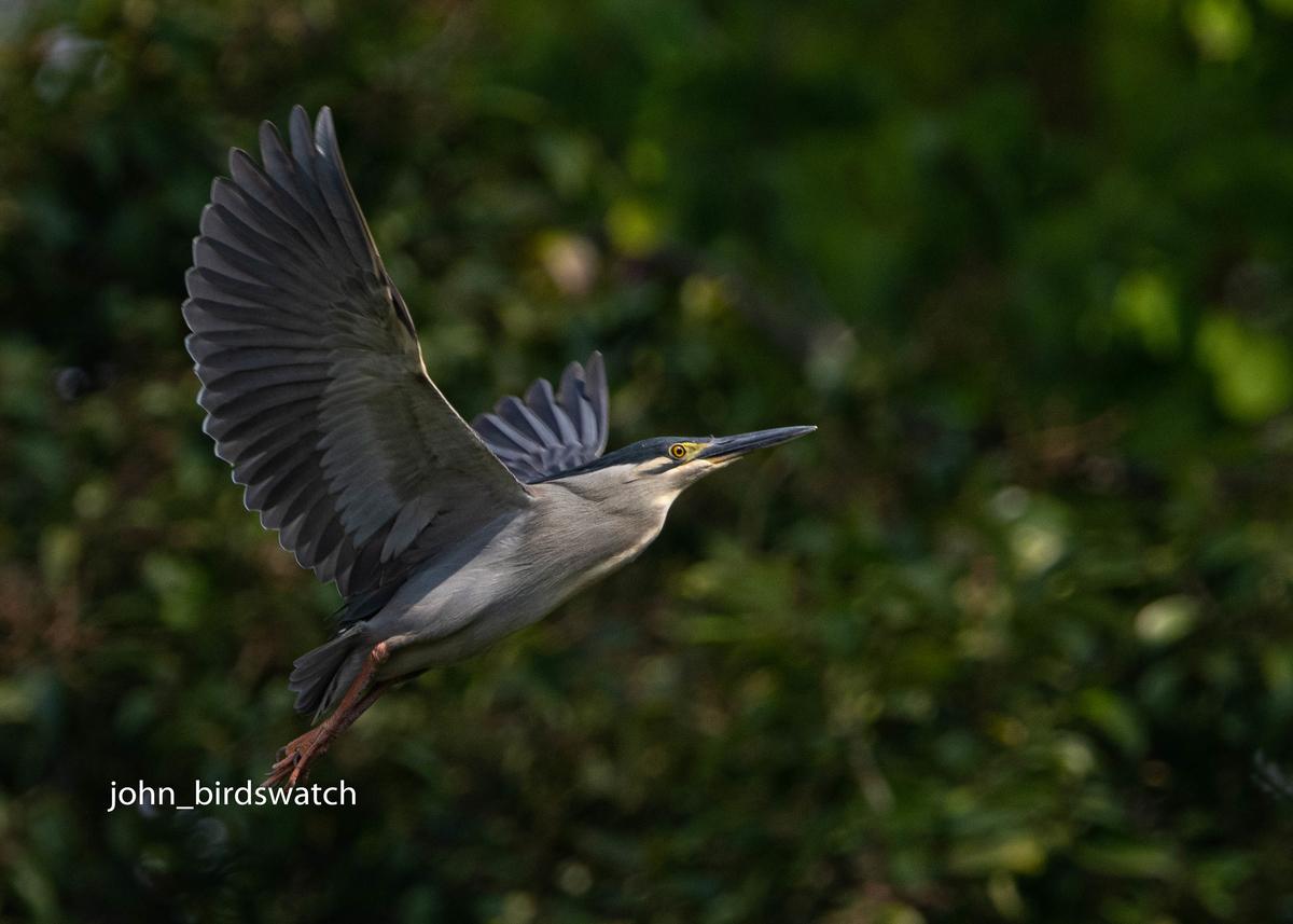 f:id:john_birdswatch:20200516171631j:plain