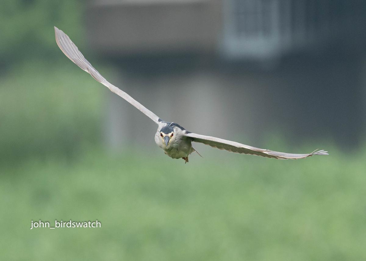 f:id:john_birdswatch:20200706210959j:plain