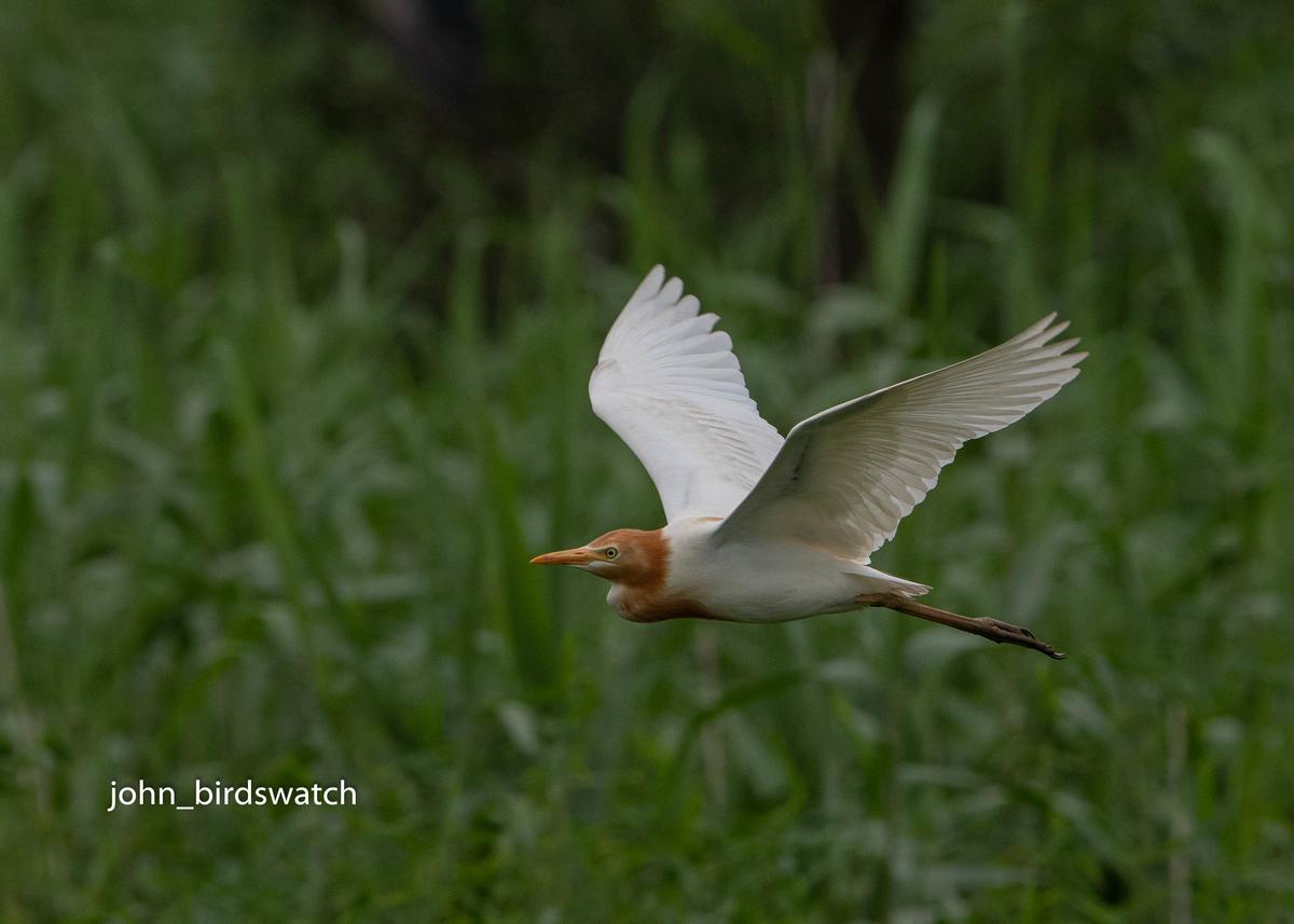 f:id:john_birdswatch:20200810170022j:plain