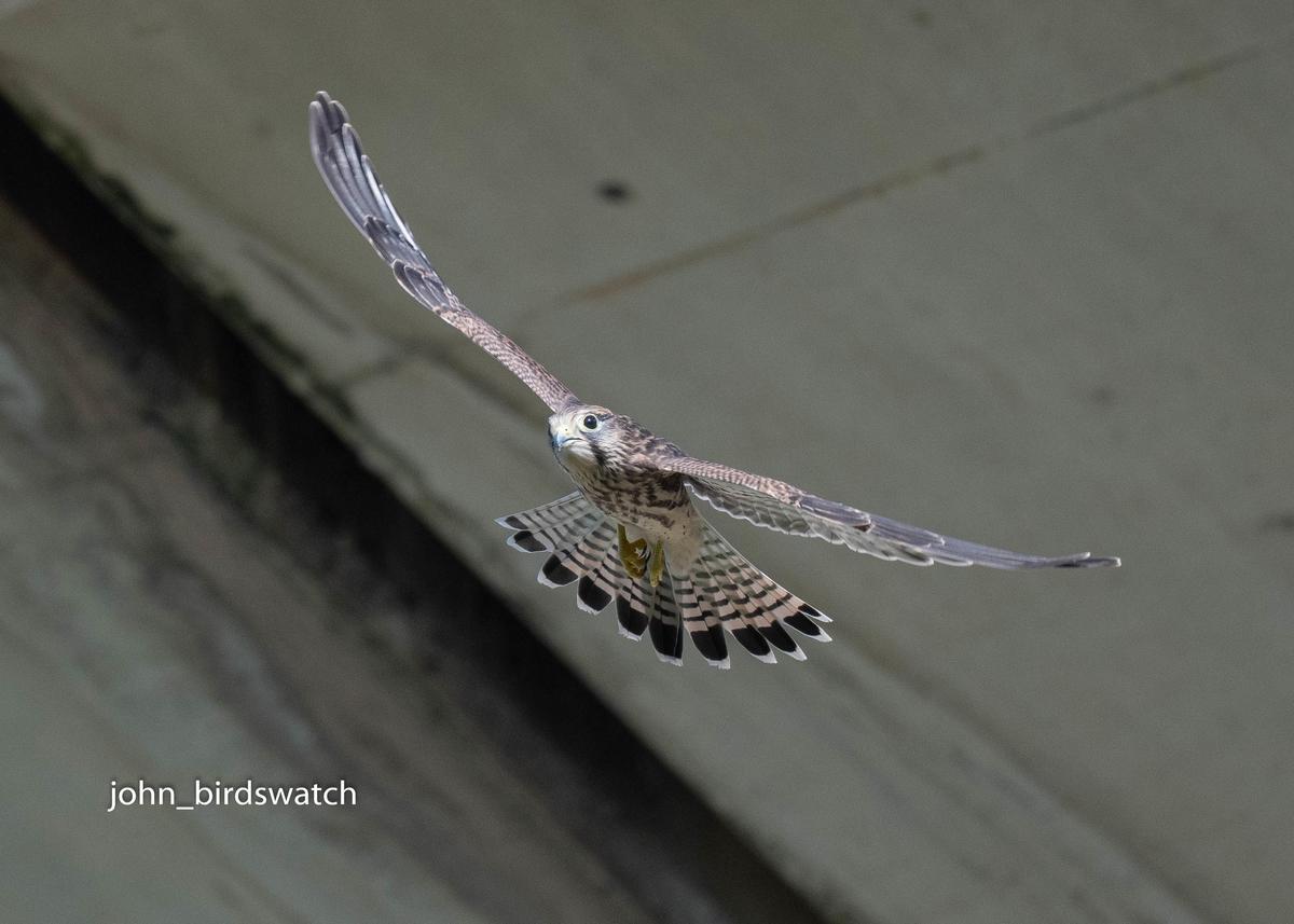 f:id:john_birdswatch:20200902175801j:plain