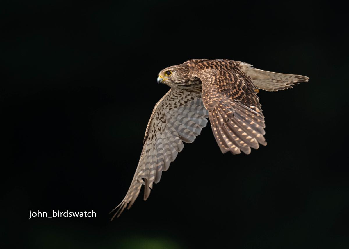 f:id:john_birdswatch:20200902181201j:plain