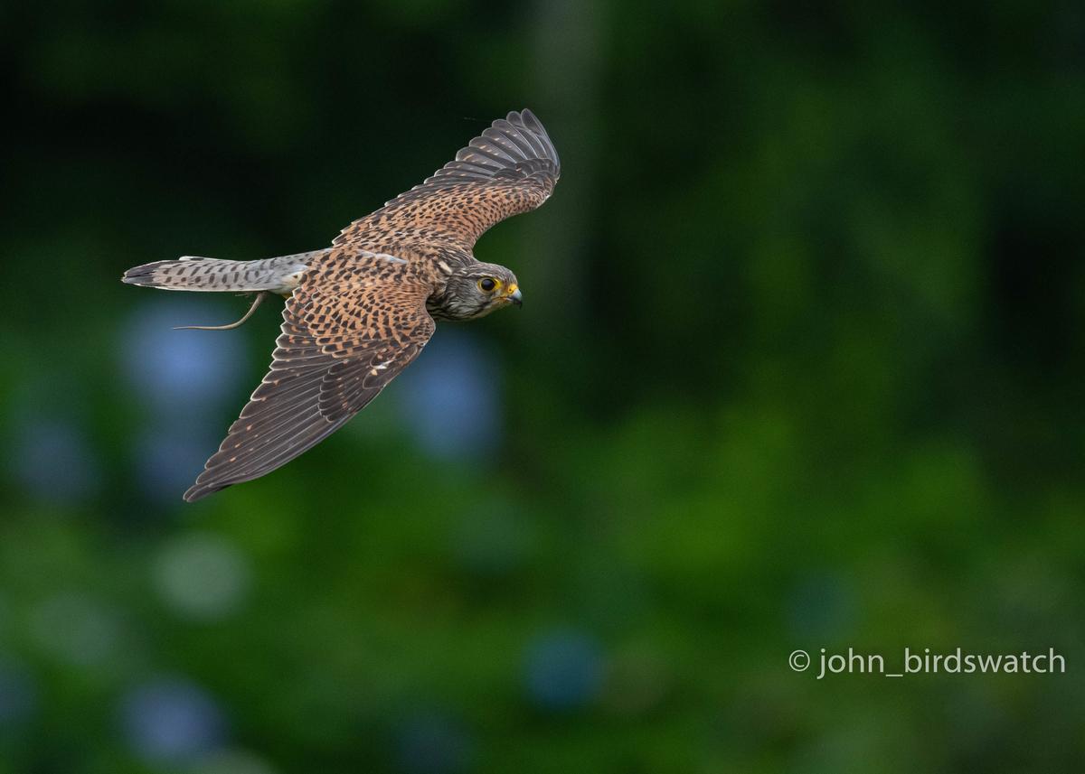 f:id:john_birdswatch:20200902181835j:plain