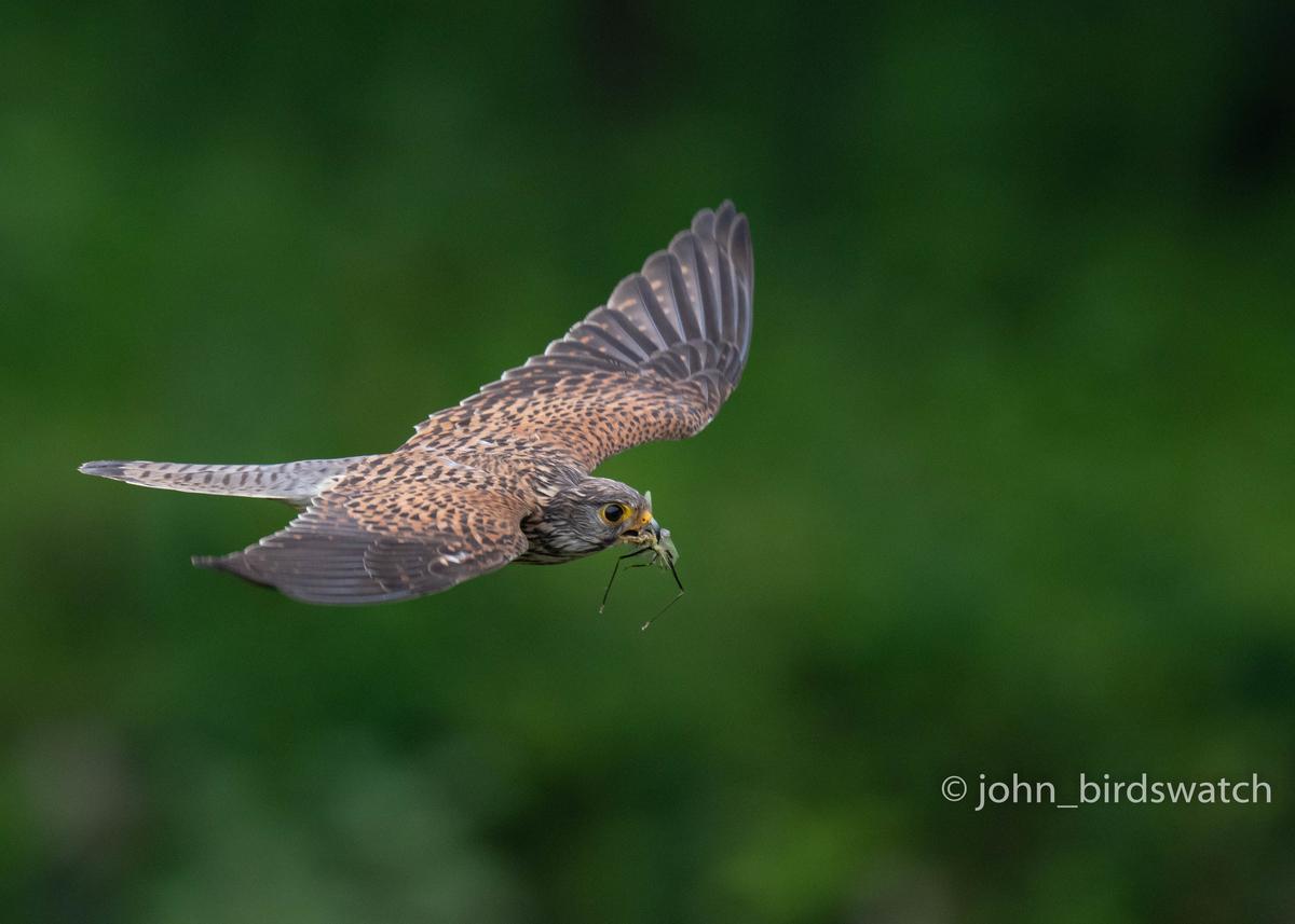 f:id:john_birdswatch:20200902181946j:plain