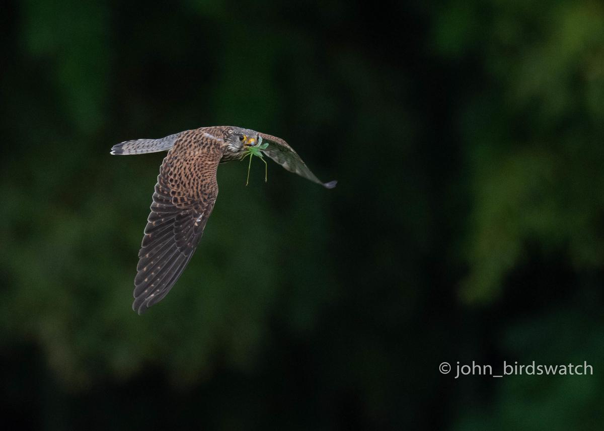 f:id:john_birdswatch:20200902182033j:plain