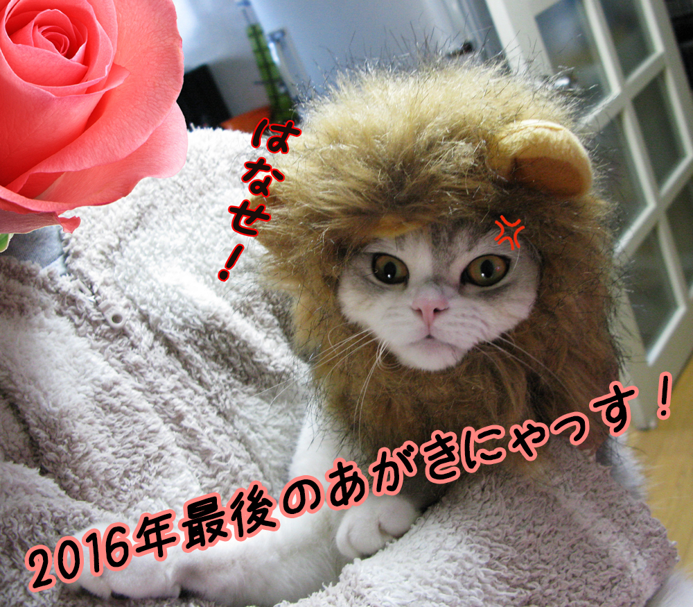 f:id:jojomiguel37:20161231134812j:plain