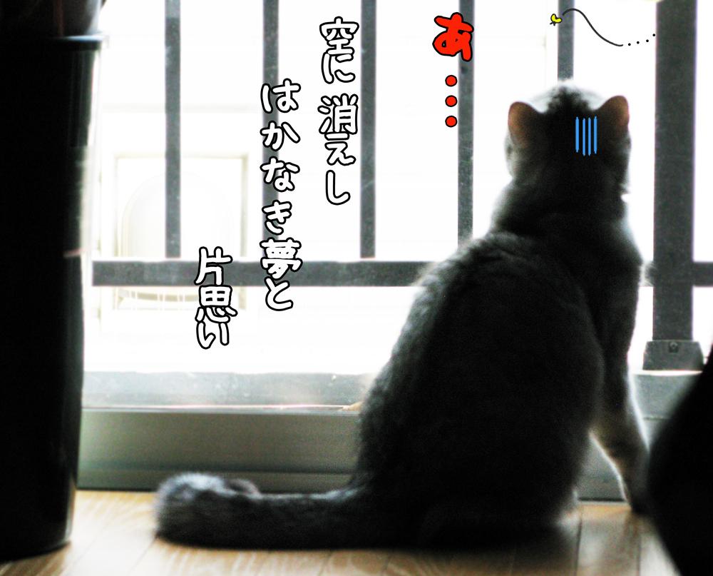 f:id:jojomiguel37:20170521184601j:plain