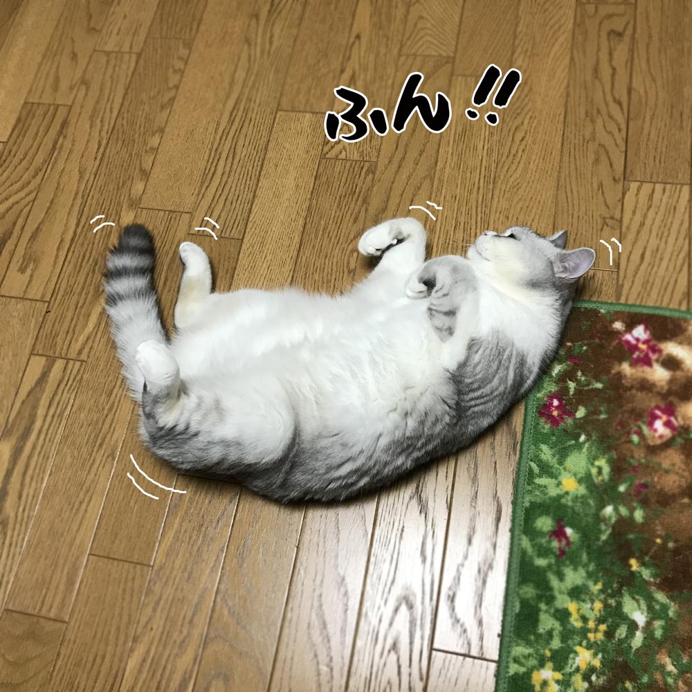 f:id:jojomiguel37:20170913153829j:plain
