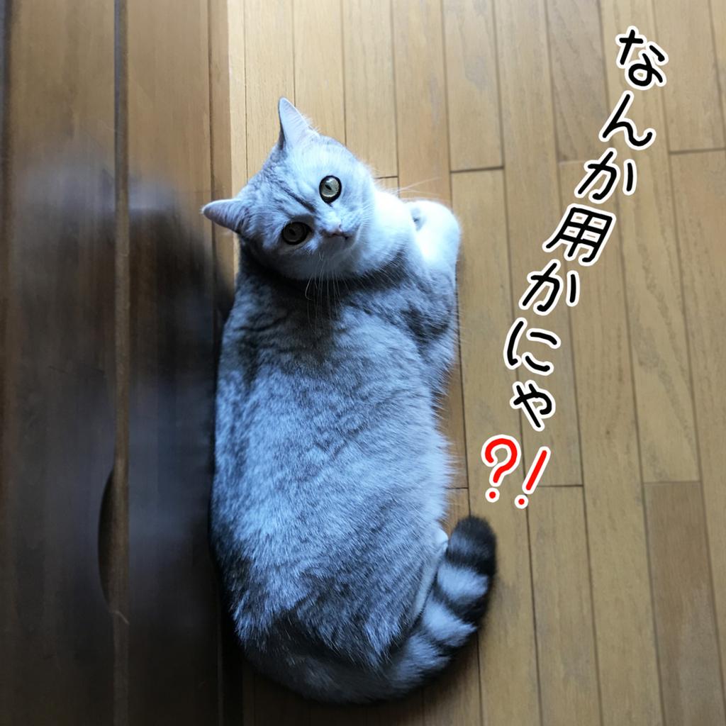 f:id:jojomiguel37:20171026183627j:plain