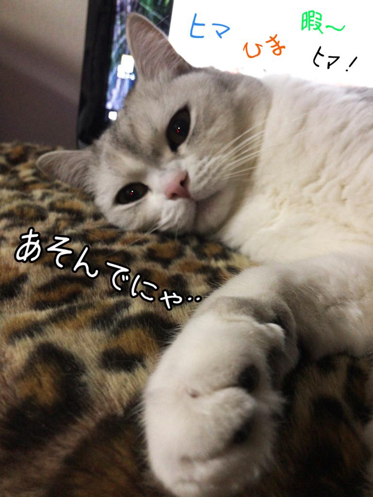 f:id:jojomiguel37:20171121112024j:plain