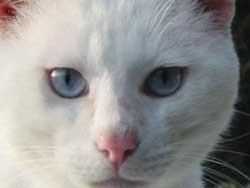猫がぬんっと
