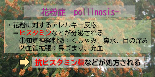 f:id:jonny1205:20210223094510p:plain