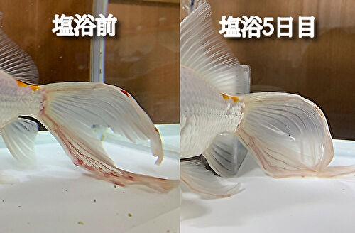 塩浴前と塩浴5日後の比較した画像