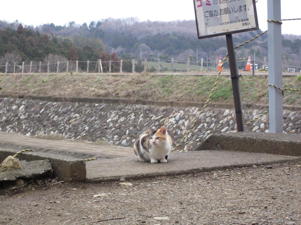 f:id:joshi-julietta:20120311153928j:plain