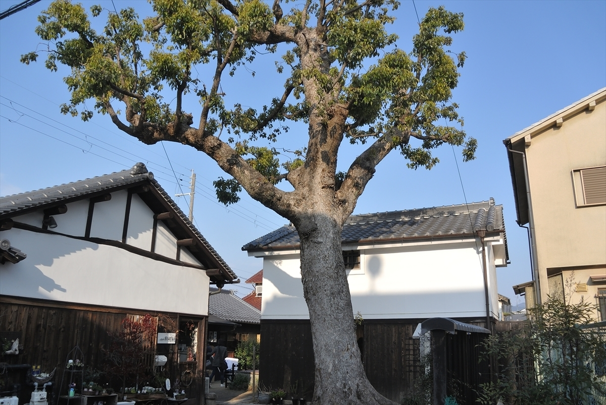 f:id:jotoyumekoi:20200201001703j:plain