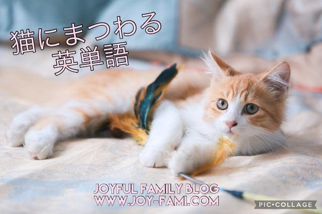 f:id:joyfulfamilyblog:20210627154128j:plain