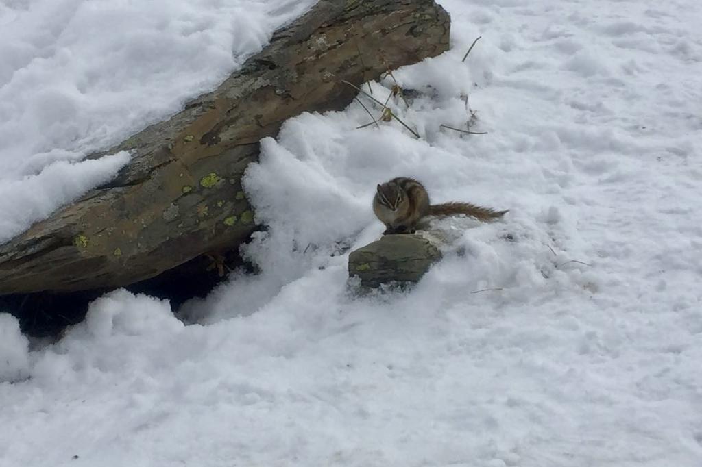 真っ白な雪の上に一匹の小さなリス。