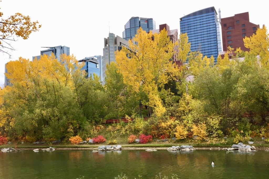 手前に川が流れてその後ろに黄葉した木々、さらにその後ろにダウンタウンのビル群が見える。