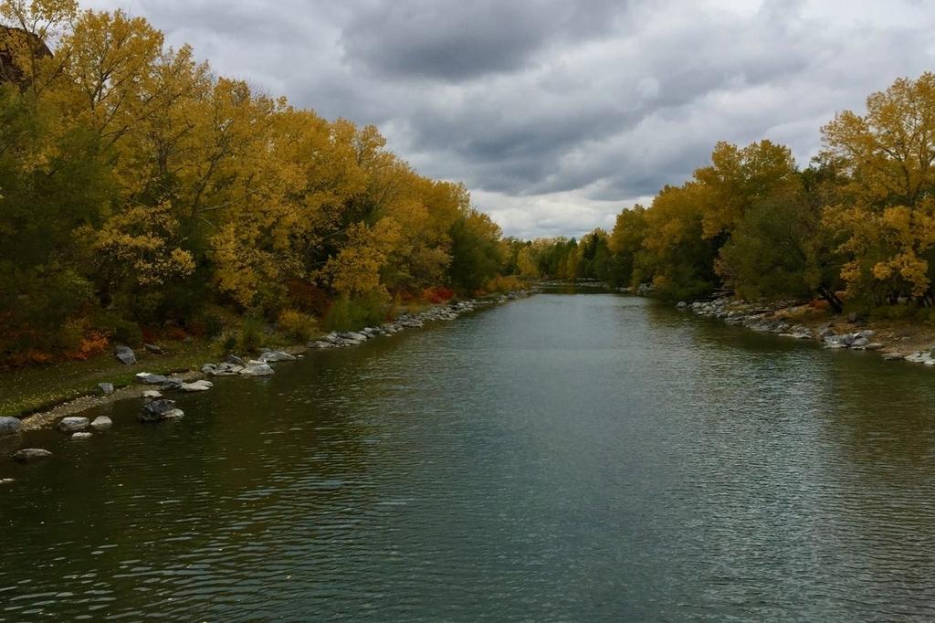 中央にボウ川が流れて両側に黄葉した木々が生い茂る。そらはグレーに曇っている。