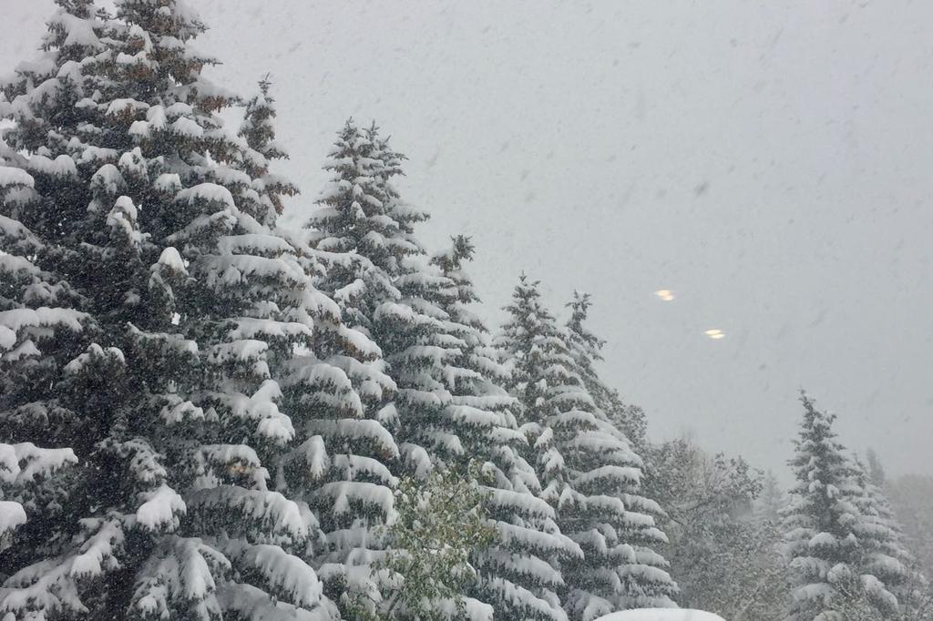 左から右下に向かって杉が連なり、雪がたくさん積もっている。画面いっぱいに降り続く雪の粒。