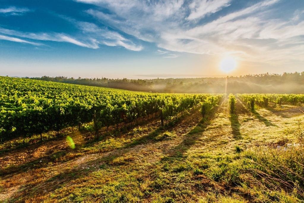 カナダワインの4大産地
