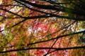 [PENTAX][K20D]箱根の紅葉