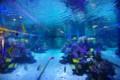 [PENTAX][K20D]魚眼レンズで魚を見る