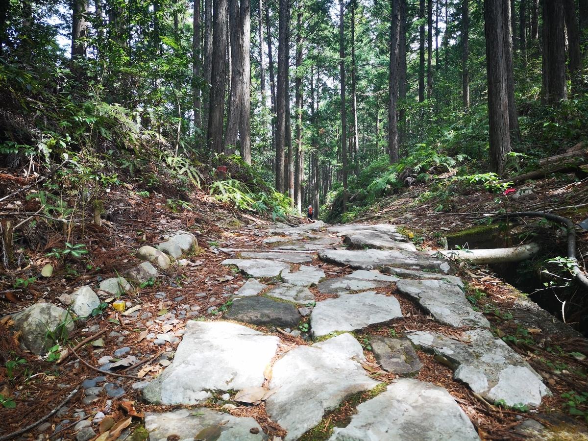 熊野古道 中辺路 トレッキング