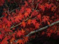 f:id:jun-731-kwgc:20091108153334j:image:left